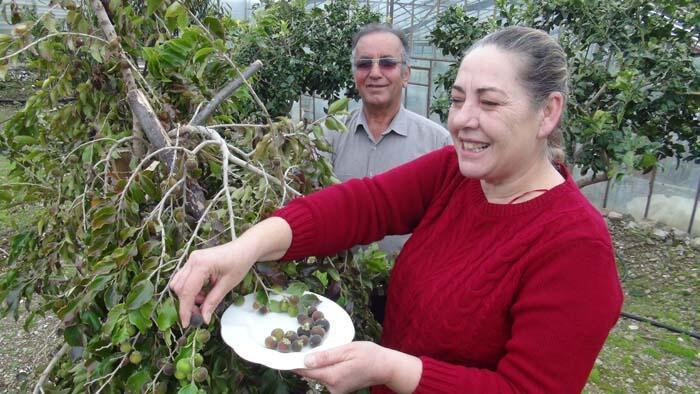 Antalya'da emekli çift ketembilla meyvesi üretti!