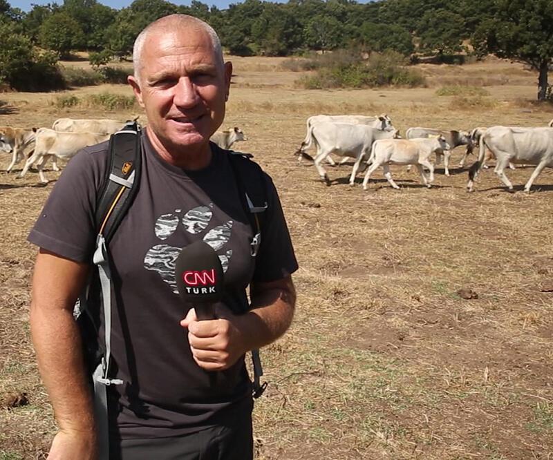Boz ırk sığırının hikayesi