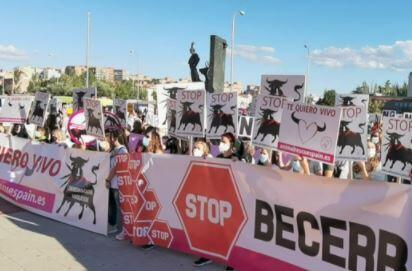 Boğa güreşleri için protesto