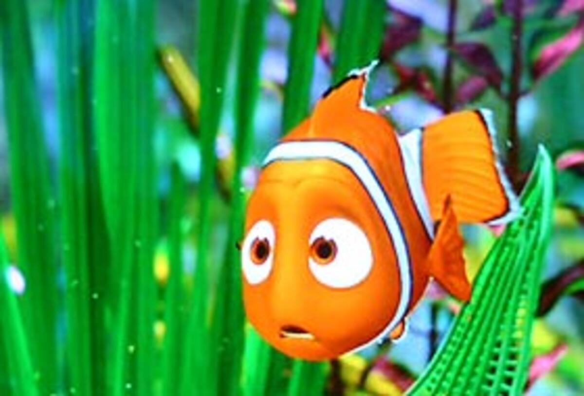 """Kayıp Balık Nemo"""" tehdit altında"""