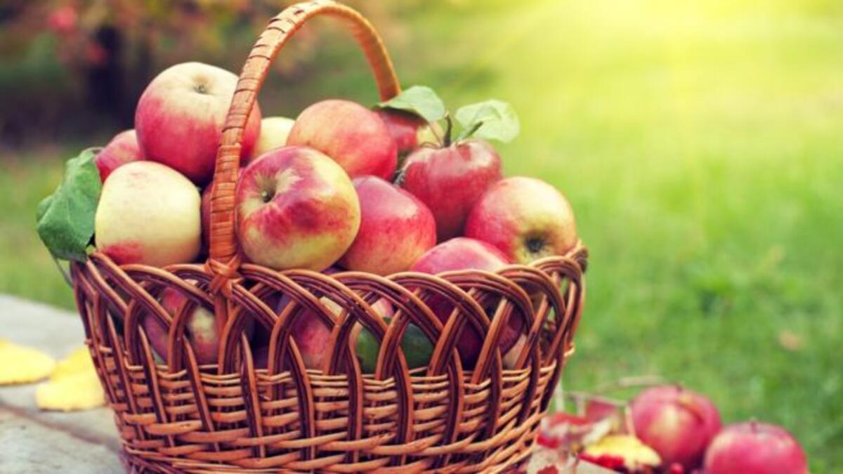 Elmalar bozulmadan 1 yıl dayanabilecek! ile ilgili görsel sonucu
