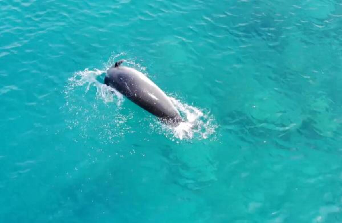 Akdeniz foku Üç Adalar'da görüntülendi - Son Dakika Haberleri İnternet