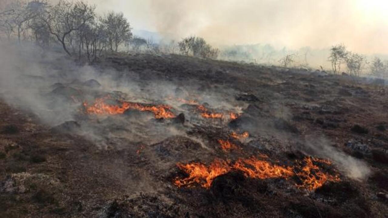 Son Dakika Haberler: Kızılırmak Deltası Kuş Cenneti'nde yangın | Video - Son Dakika Flaş Haberler