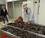 Son Dakika:  Yılda yaklaşık 1 milyon ton tüketiliyor! Denizden sofraya midyenin yolculuğu