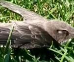 Son Dakika: Son Dakika: Ebabil kuşu için seferber oldular | Video