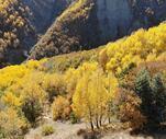 Son Dakika: Erzincan'da sonbaharda renk cümbüşü