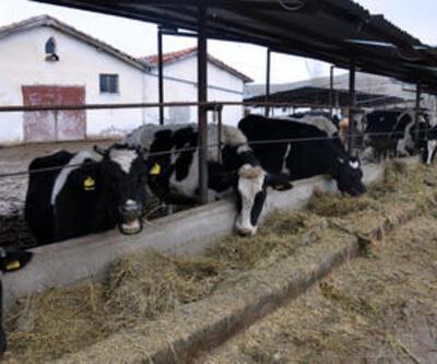 Sığır ithalatında gümrük vergisi yüzde 15 oldu