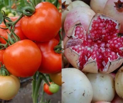 İhracatın şampiyonları nar ve domates