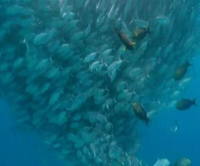 Küresel ısınma balık boylarını da vuracak!