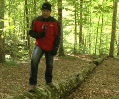 Doğanın residenceleri ölü ağaçlar
