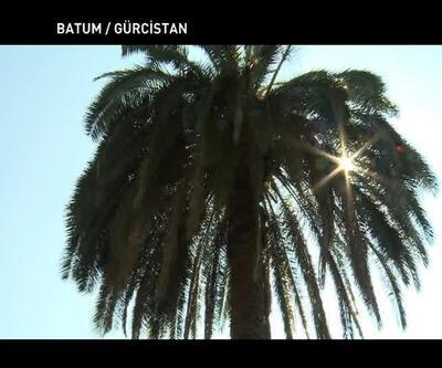 Batum'daki botanik bahçesinin özellikleri nelerdir?
