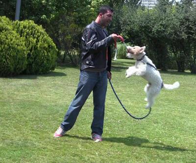 İkinci köpeği alırken nelere dikkat etmeliyiz?
