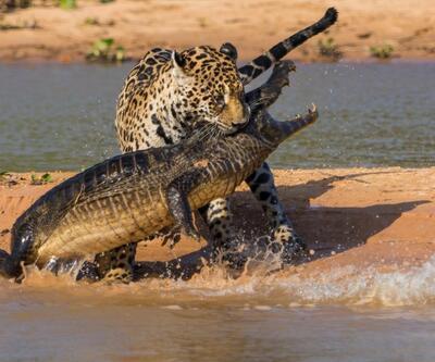 Ödüllü vahşi yaşam fotoğrafları