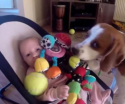 Köpek, bebekten böyle özür diledi!