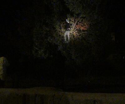 Başına poşet geçirip ağaca astılar!