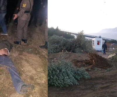 Yırca'da 6 bin zeytin ağacı kesildi
