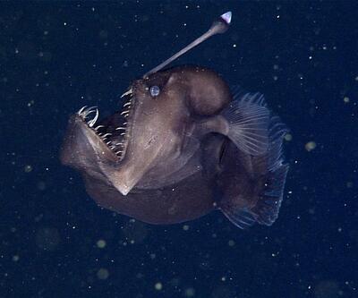 Kara deniz şeytanı ilk kez görüntülendi