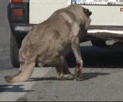 Köpeğe işkence kamerada