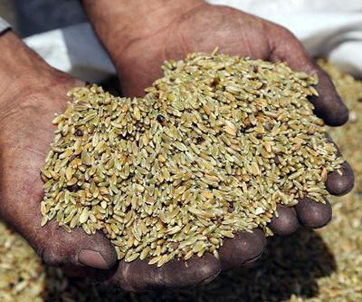 Rusya'dan tahıl ihracatı durdu