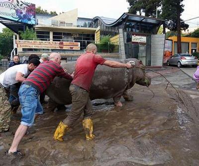 Vahşi hayvanlar şehri bastı