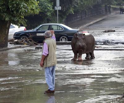 Hayvanat bahçesi zarar görünce vahşi hayvanlar şehre kaçtı