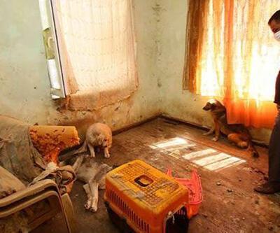 İzmir'deki dehşet evinden hayvan leşleri çıkarıldı