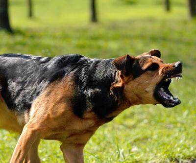 Koşu yaparken köpeklerin saldırısına uğradı!