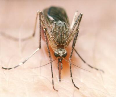 Sivrisinekler sizi neden seçiyor?