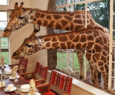 Kenya'ya gitmişken safari dışında yapılabilecek 8 şey!