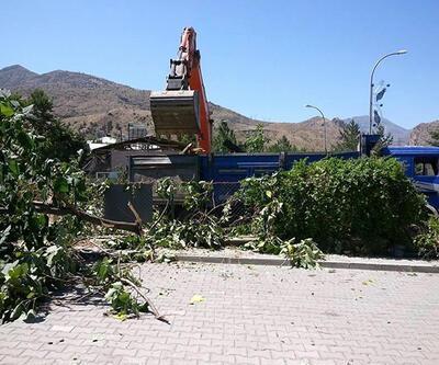 170 yıllık ağacı hükümet konağı için kestiler