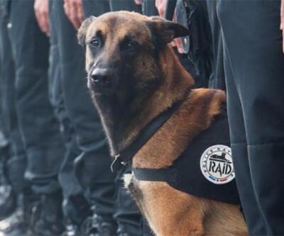 Paris'te öldürülen polis köpeği Diesel için sosyal medyada yas