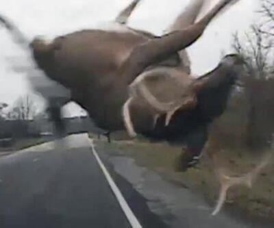 Polis aracı geyikle çarpıştı
