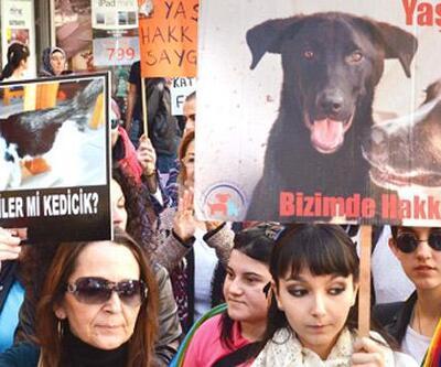 Hayvana şiddete hapis cezası geliyor