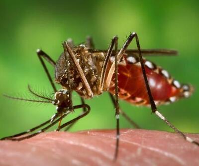 Zika virüsü Danimarka'da görüldü