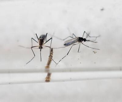 Zika virüsüne aşı ancak 5 yıl sonra çıkabilecek