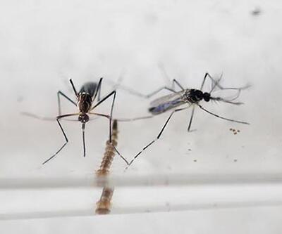 Zika virüsü hızla yayılıyor