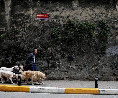 O bir metropol çobanı