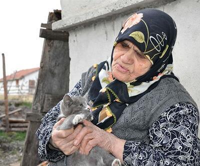 Kediler aç kalır diye köyden ayrılmıyor