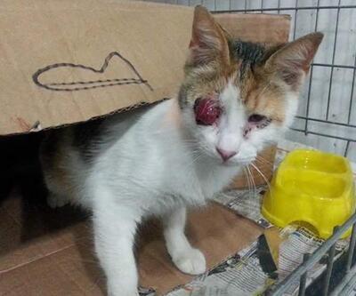 Aydın'da bomba sanılan paketten kedi çıktı