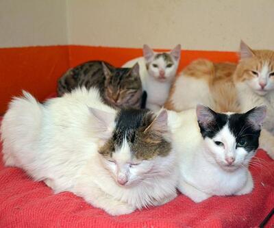 Yüksekova'nın kedileri Bitlis'e gönderildi