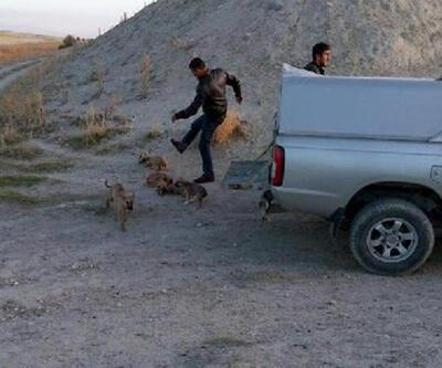 Ürgüp'te 'köpek tekmeleme' infial yarattı, belediye yalanladı