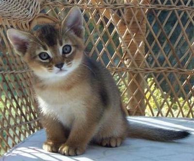 15 maddeyle hayvan hakları ihlali