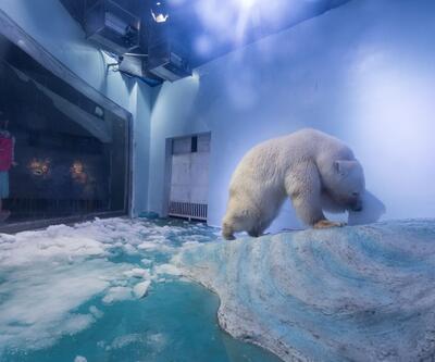 Küresel ısınma hayvanların davranışlarını bozdu