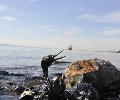 İzmit Körfezi'nde yakıt sızıntısı: Petrole bulanan kuşlar yürek parçaladı