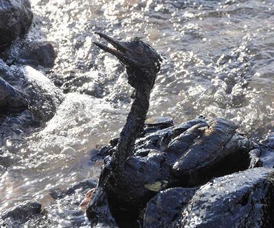 Petrole bulanan kuşlar yürek parçaladı