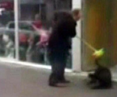 Sokak köpeklerini sopayla acımasızca dövdü