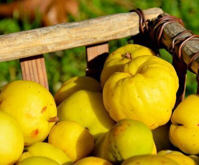 Bursa'dan Hollanda'ya ayva ihracatı başladı