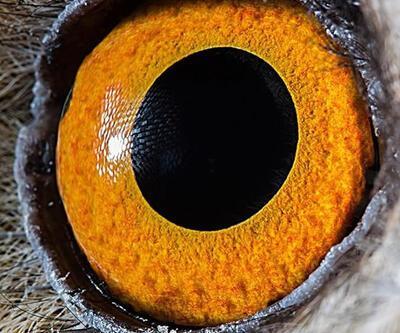 Yakın markaj: Hayvan gözleri