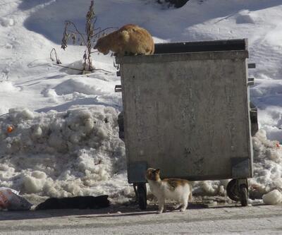 Donarak ölen kedinin başından ayrılmadılar