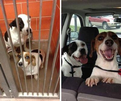 Köpeklerin sahiplenilmeden önce ve sonraki halleri